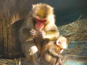 Ялтинский Зоопарк Ялта